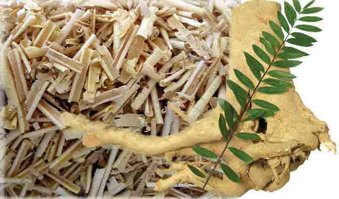 tác dụng chữa bệnh của cây mật nhân