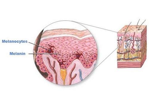 Cấu tạo da và melamin