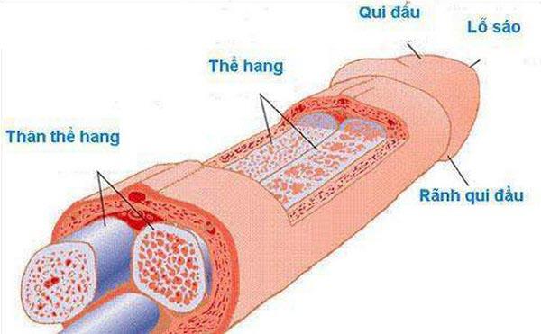 nguyên nhân rối loạn cương dương và cách điều trị